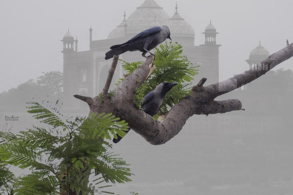 Agra by dkbarnett