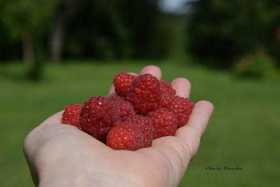 organic raspberries from the garden by parisouailleurs