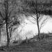 Trees, Mangawara Stream
