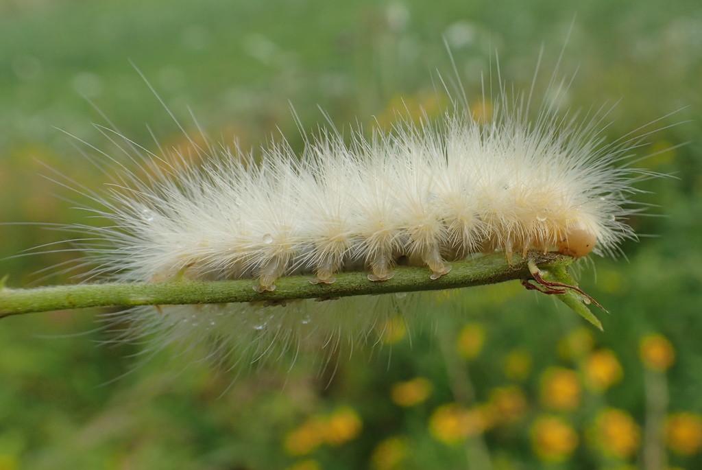 Tiny Caterpillar Feet by cjwhite