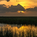 More Everglades sunset by danette