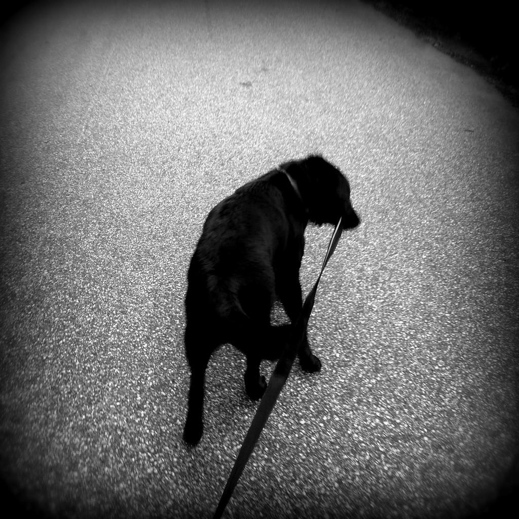 Walkies by huvesaker
