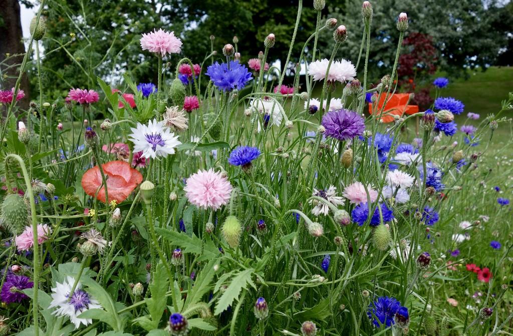 Wild flowers by rosie00