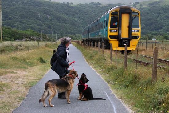 Dog train-ing by shepherdman