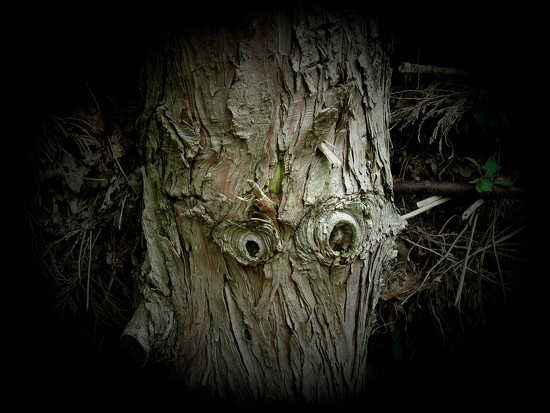 big tree is watching you... by gijsje