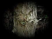 19th Jun 2018 - big tree is watching you...