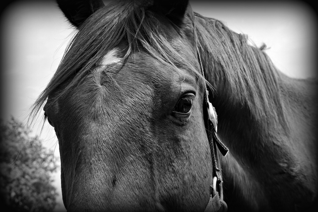 Just Horsin' Around for the B&W Challenge by farmreporter
