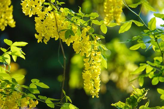 Lemon Yellow by seattlite