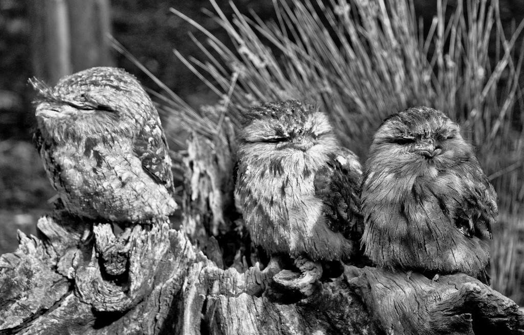 hear no evil, see no evil, speak no evil by annied