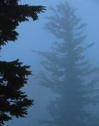 10th Jun 2018 - Tree and Mist