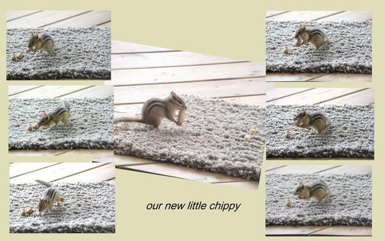 We've a new little chipmunk around  by bruni