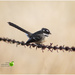 Bird on a wire  by kerenmcsweeney