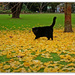 Joey in the Ginko leaves