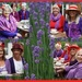 'purple with a red hat'