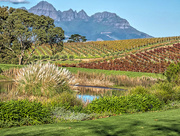 22nd Jun 2018 - Autumn colours in the Winelands.