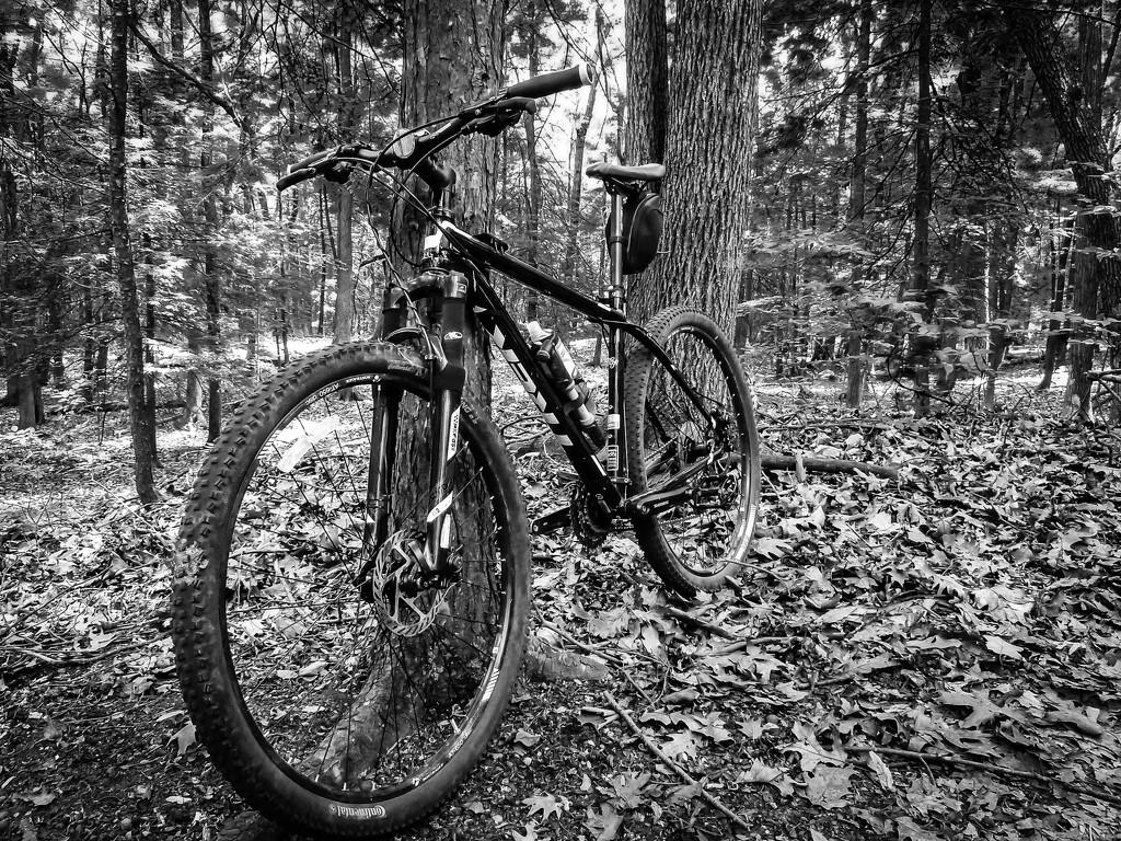 Mountain Bike, in Black and White. by batfish