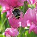 Bee by seattlite