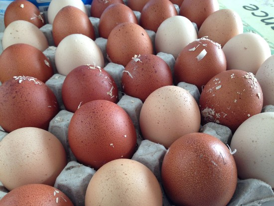 Fresh eggs  by happypat