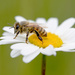 Let it BEE! by fayefaye