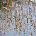 EXTRAS:  Pond Life