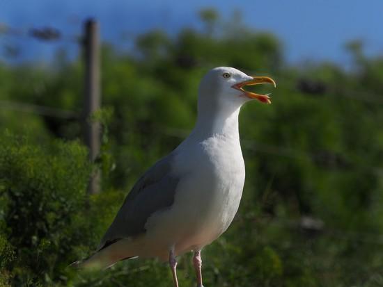 24-06 birdie by tstb13