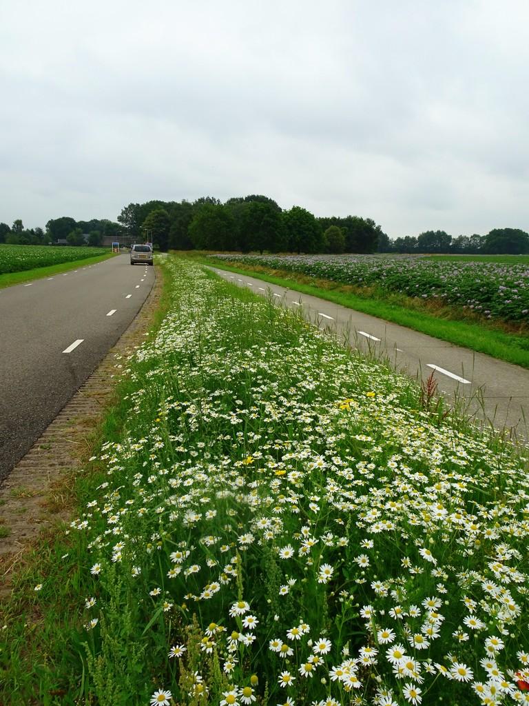flowery roads by gijsje