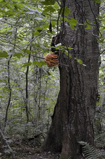 Tree and Fungus by redandwhite