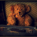 Old Ted by dide