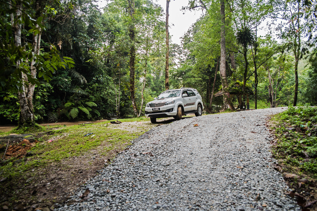 A New gravel track in the Rain Forest by ianjb21