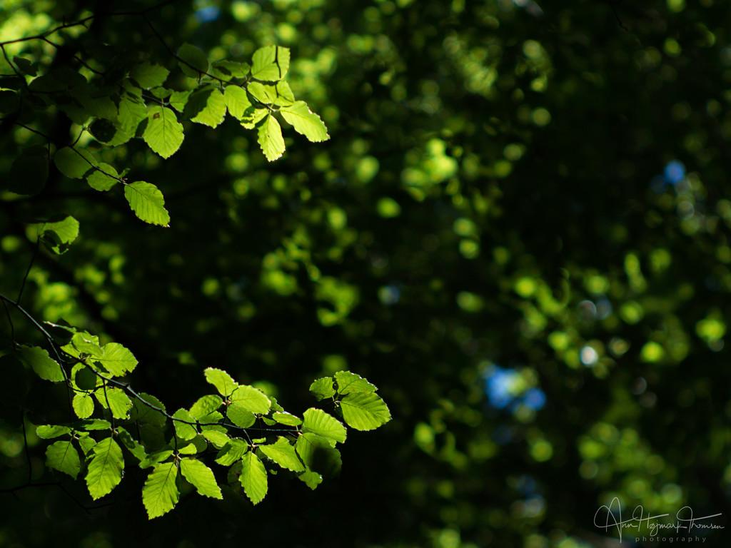 Sliver of light by atchoo