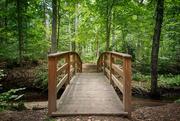 25th Jun 2018 - A bridge in the woods.