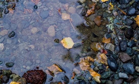 November puddle in June by cristinaledesma33