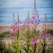 On the beach  by haskar