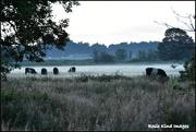 25th Jun 2018 - Mist across the marshes