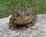 26th Jun 2018 - Mr. Toad