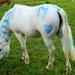 Funky pony (Totally random Tuesday!)