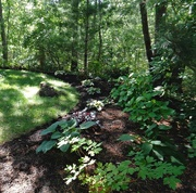 27th Jun 2018 - My shady areas are looking better.
