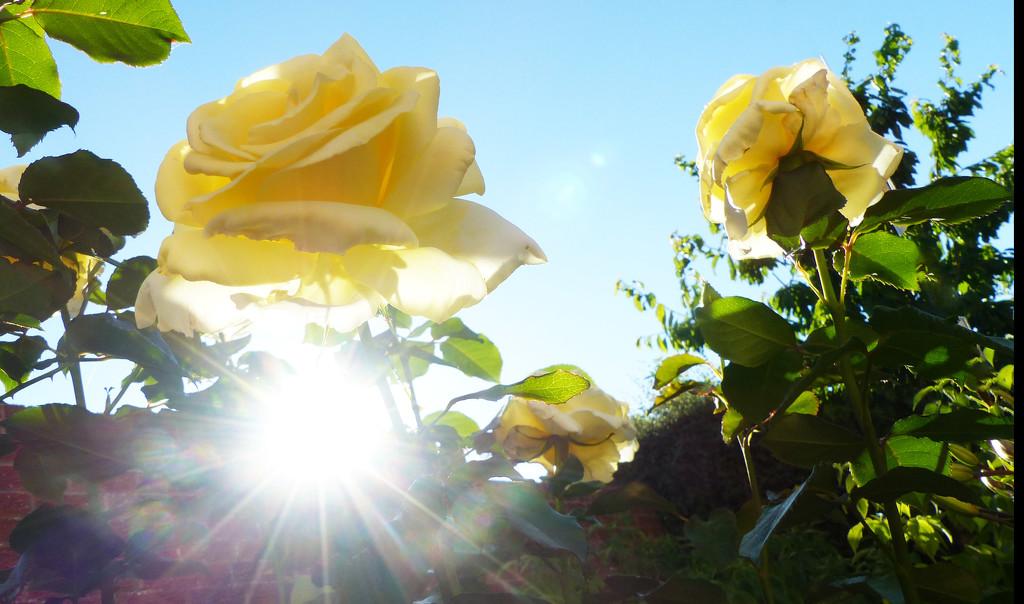 In my garden by peterday