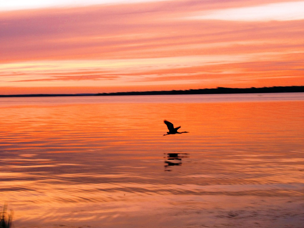 Sunset and grey heron by bruni