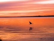 28th Jun 2018 - Sunset and grey heron