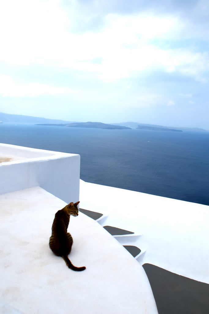 Santorini Kitty by blueberry1222