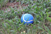 28th Jun 2018 - We're growing tennis balls in our yard