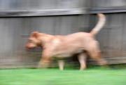 27th Jun 2018 - Dog on Patrol