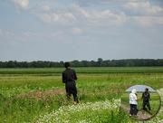 30th Jun 2018 - more flower fields