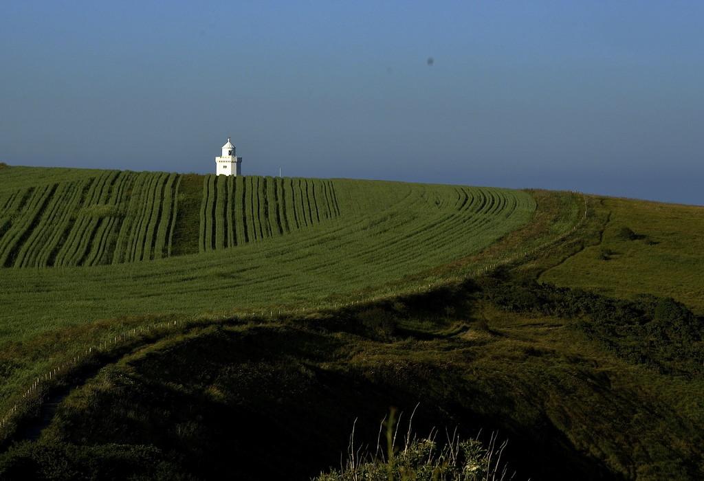 Field of Green by redandwhite
