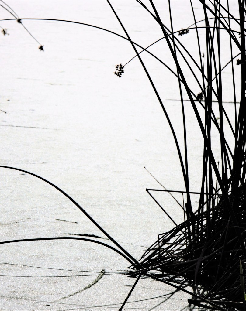 Talking Waters - Grasses by granagringa