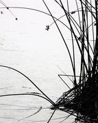 22nd Jun 2018 - Talking Waters - Grasses