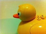 4th Jan 2011 - Golden Duck