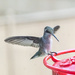 """Hummer Bird""  by jnorthington"