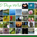 30 Days Wild of June by 30pics4jackiesdiamond
